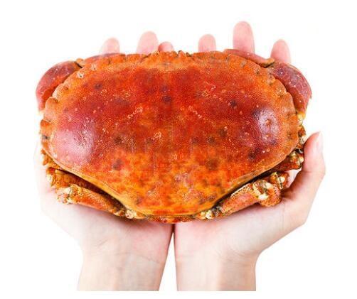 买鲜海外旗舰店 进口面包蟹600-800g(一只)