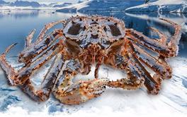 2017年最值得购买的帝王蟹排行榜(下篇)