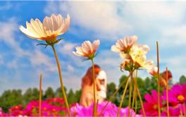 带你去看深圳最美的花--十一月最适合观赏的花排行榜