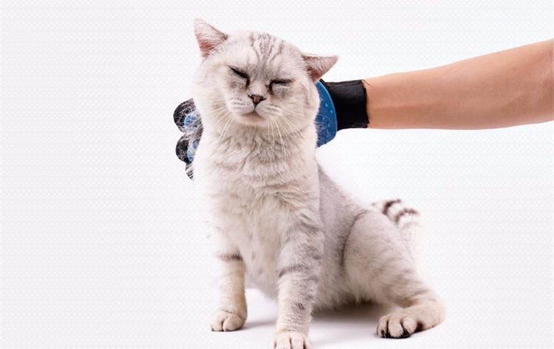 2017年最适合买给主子的猫咪去毛按摩刷排行榜