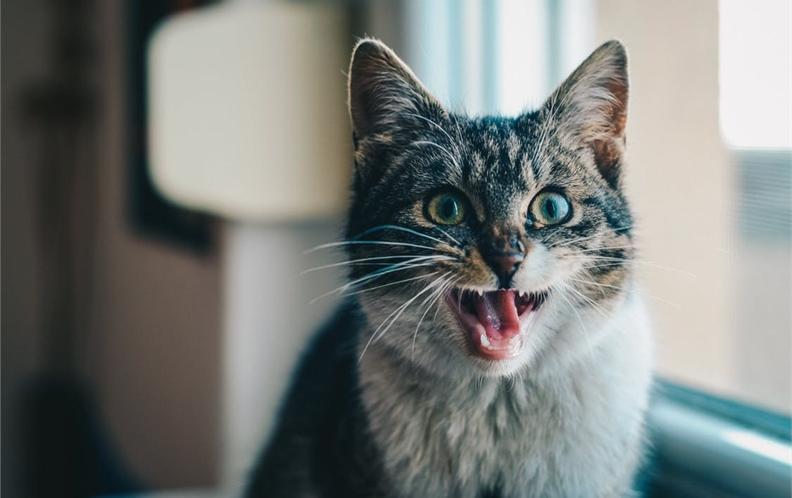 2018年十款100-200元宠物猫狗饮水器排行