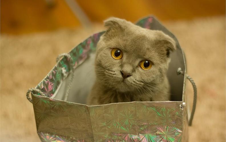 2018年便携式可折叠宠物猫砂盆猫厕所排行