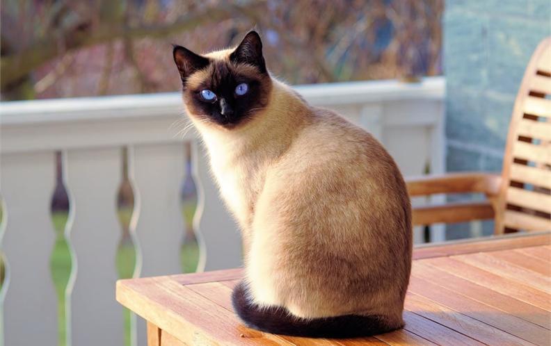 2018年50-100元宠物猫用口腔护理猫咪漱口水排行