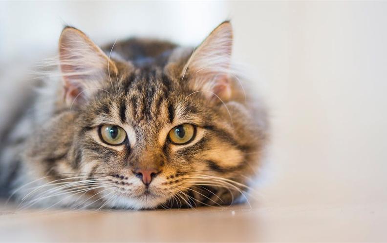 2018年50元内宠物猫用口腔护理猫咪漱口水排行