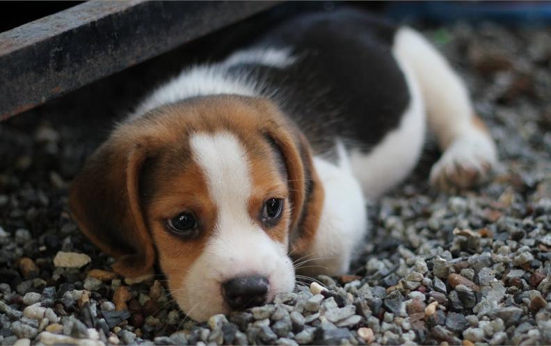 2018年50-100元宠物犬用口腔护理狗狗漱口水排行