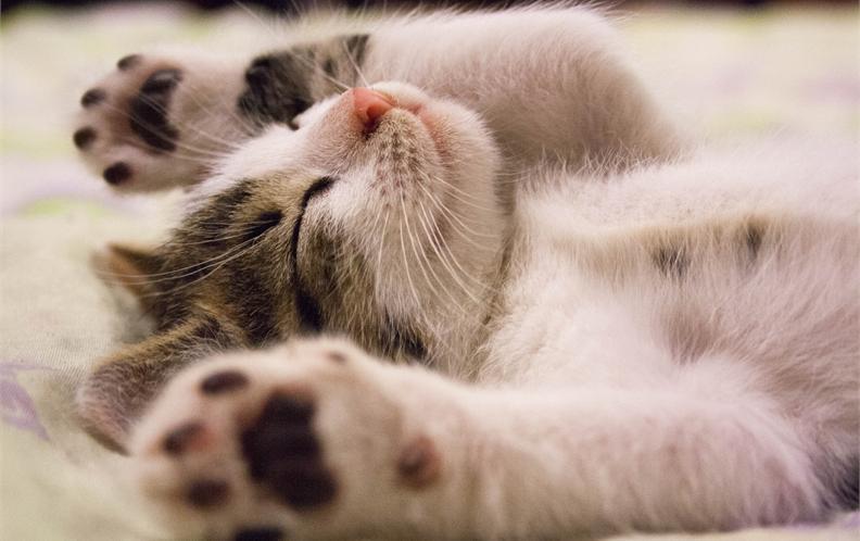 2018年100元以上宠物猫用口腔护理猫咪漱口水排行