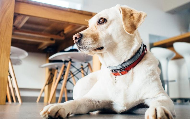 2018年100元以上宠物犬用口腔护理狗狗漱口水排行