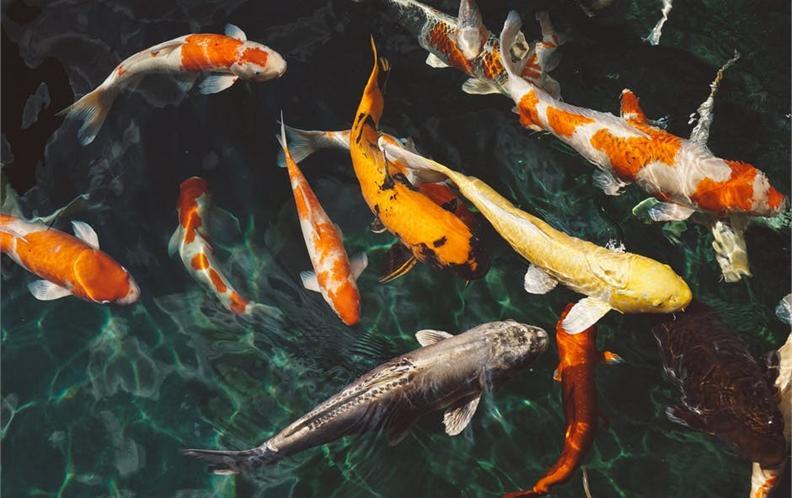 2018年100元-200元宠物鱼定时喂食器排行