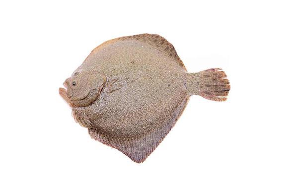 多宝鱼(500-600g)