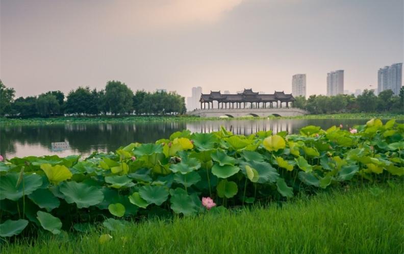 2019年武汉市灭蚊子家政保洁清洗公司排行榜