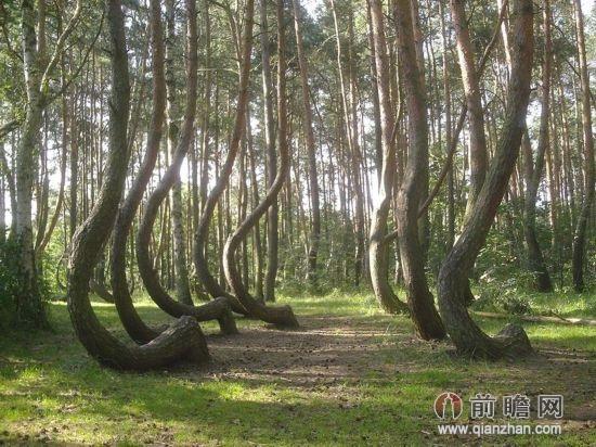 红杉国家森林 美国加利福尼亚州: 来到世界最大的森林——红杉国家森林,一切烦恼都能烟消云散。宁静远不足以描述这片巨大的土地。弯曲森林 波兰: 你可以坐在森林一角的隐秘处,品读一本钟爱的书。人们认为,这些弯曲是人造的,但是没有人确定为什么有人要制造这样的树。不过,这样的形状刚好让游客舒舒服服地坐下来。古山毛榉林 斯洛伐克: 步行穿过古山毛榉林,这是原始大自然极好的范例,充分展示了生态系统过去是怎样伸展传播的,以及欧洲的山毛榉树是怎样演变的。