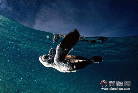 顶尖国家地理摄影师奉献绝美海洋风情图集