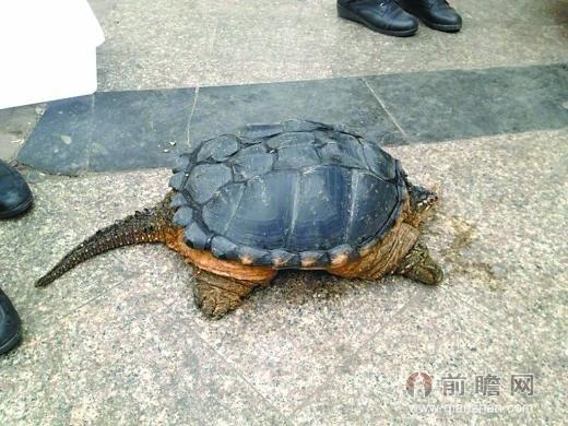 记者将乌龟照片发给永川动物园相关负责人