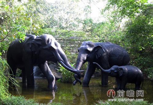 世界上最美的动物园 春游目的地新加坡zoo