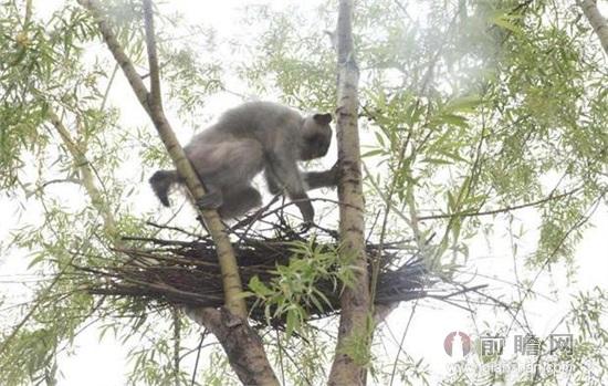 动物遇到危险时怎么保护自己