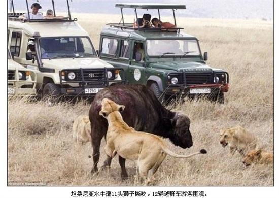狮子锁教学图解
