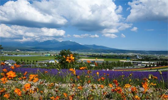 徜徉花海 夏之北海道自由行旅游攻略