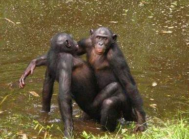 干黑人逼逼_动物园逼迫两只雄土狼交配1年:搞基都是被逼出来的