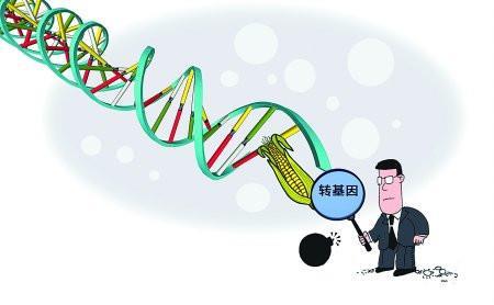 央视叫停非转基因广告 专家:国家认可转基因食品安全性