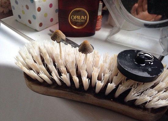 搓澡毛刷上长蘑菇