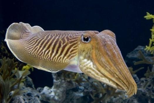真实的海妖图片
