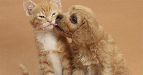 可爱小猫烦恼图片