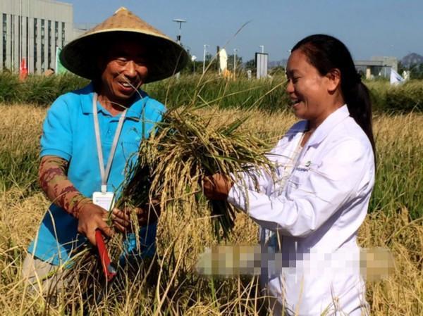 第一代海水稻试种成功亩产超620公斤 形成稳定品种要杂交8代