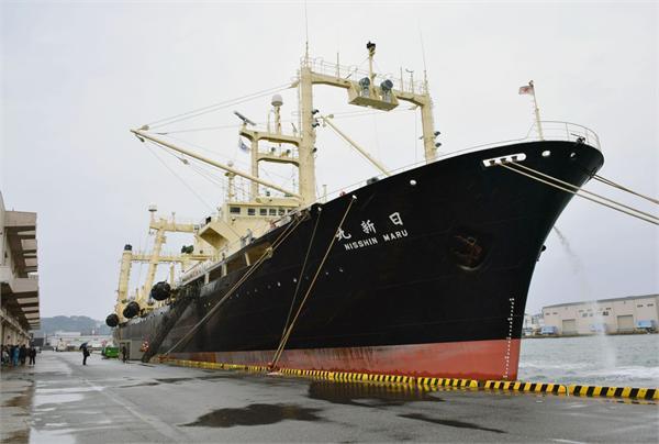 日考虑升级捕鲸船!水产厅将拨款1亿日元修缮 继续在南极开展捕鲸活动