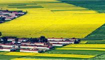 全国农业产业化联合体数量分布及发展前景解析