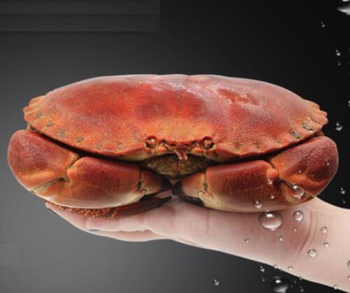 海格陵旗舰店 面包蟹600-800g(一只)