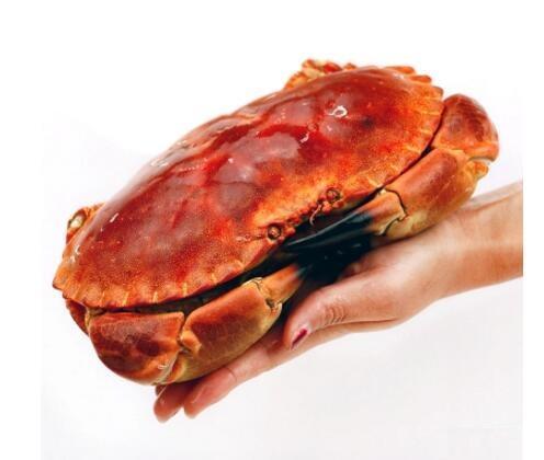 大连领鲜海产 英国面包蟹1800-2000g(两只)