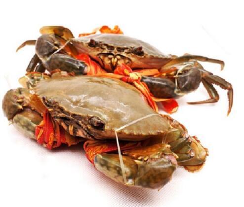 蟹必剥三门小海鲜青蟹 大公蟹红膏蟹1公1母2斤装