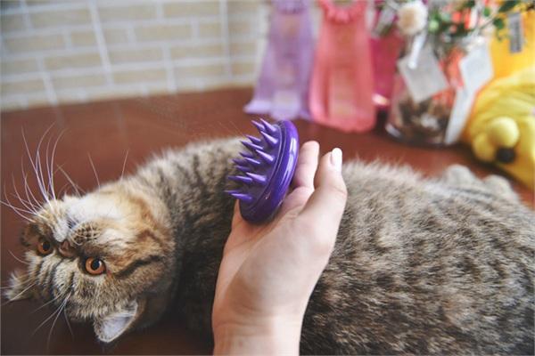 宅猫酱 猫咪狗狗通用去毛按摩刷