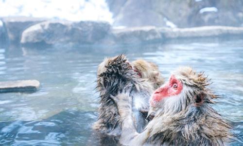 日本地狱谷温泉