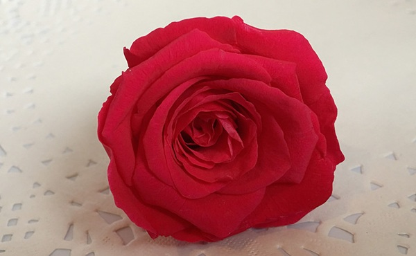 安琪拉 玫瑰永生花花材