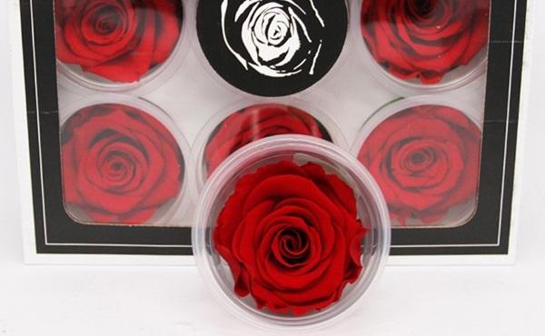 Roseamor 玫瑰永生花花材L号