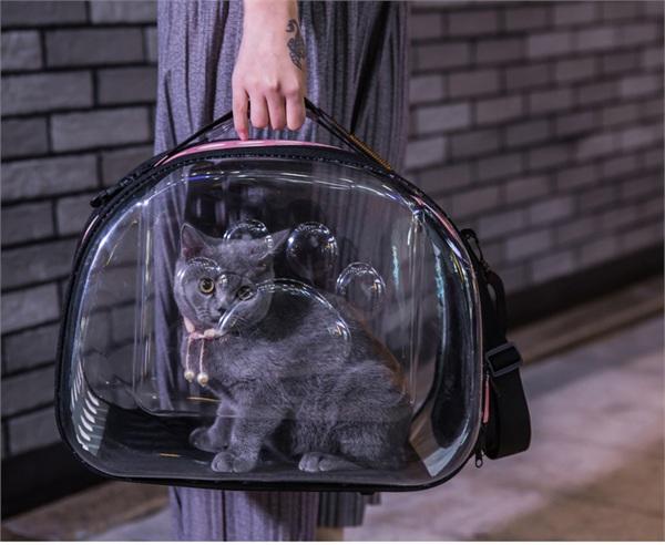 新曦宠物用品专营店 外出便携透明宠物背包