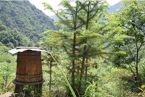 深山木桶土蜂蜜 纯正天然农家自产野生百花蜜