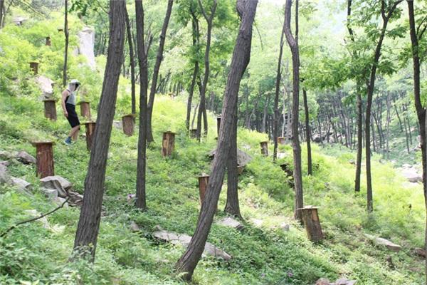 土蜂农 农家自产成熟原蜜百花蜜