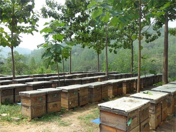益尔原生态养蜂场 盒装纯正蜂蜜巢