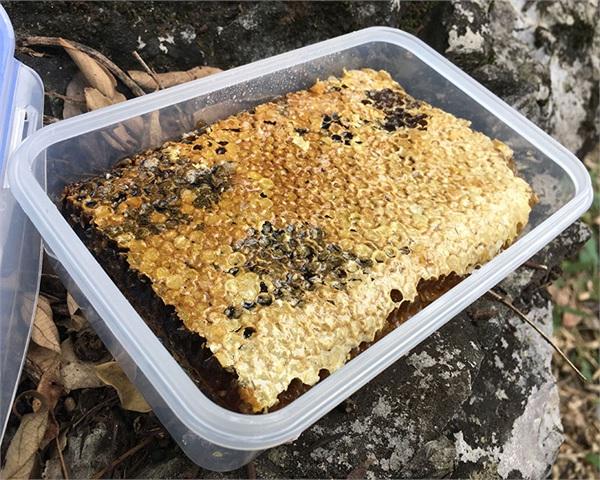 柳岸农家 纯正天然野生老蜂巢蜜