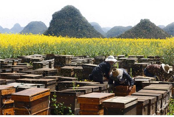 南宫蜜语天八士蜂蜜分店 进口天然百花蜜