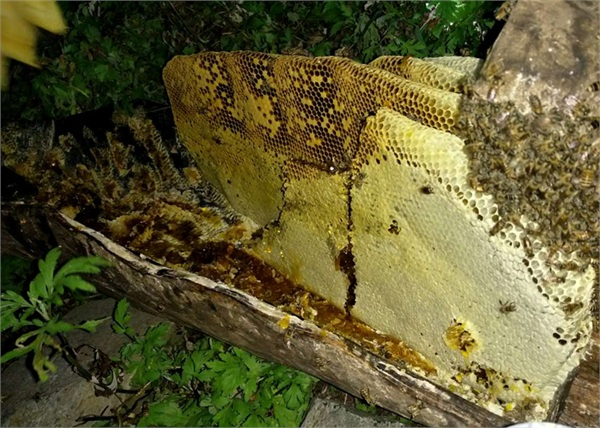 阿辉土蜂蜜 农家自产秦岭深山成熟百花蜜