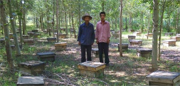老虎山土蜂蜜 农家自产野生百花蜜