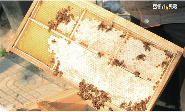 端木赐旗舰店 农家自产土蜂蜂蜜巢