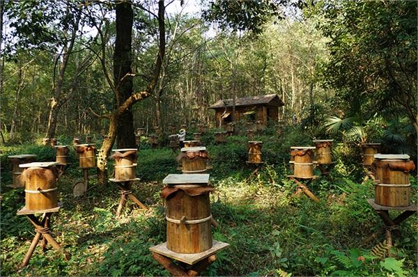 卫民深山养蜂场 深山农家自产蜂窝蜜
