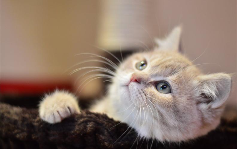 2018年100-200元开放式猫厕所猫砂盆排行榜