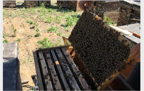 食于自然 野生洋槐蜂蜜