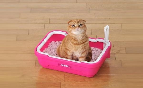I LOVE PETS 开放式猫厕所