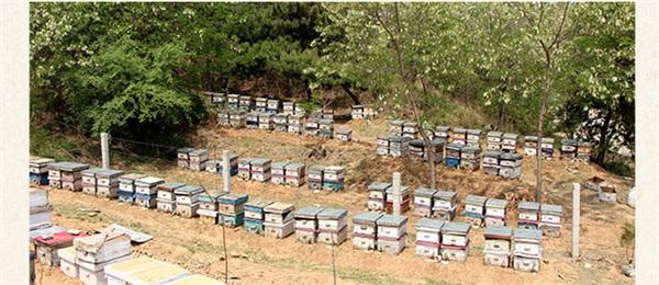 百年张家店农家蜂蜜 农家自产槐花蜜